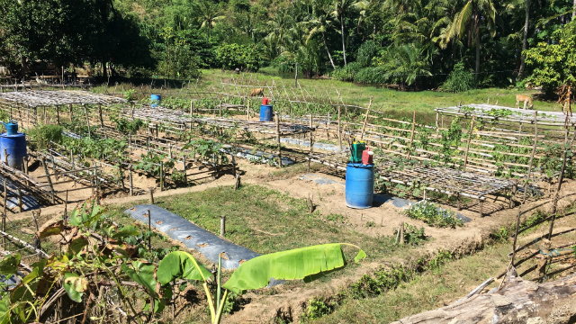LIVELIHOOD. Barangay Malawig residents now have communal farms where they get their food and extra income from. Photo by David Lozada/ Rappler